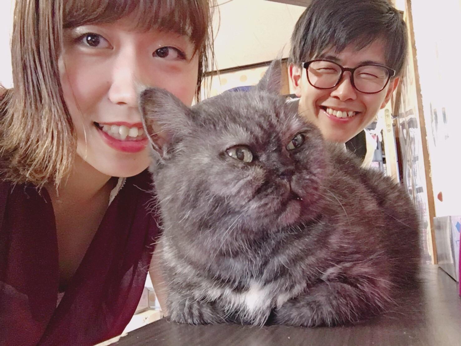 猫カフェなーごなーごの評判!愛知県長久手「たわしちゃんが有名」